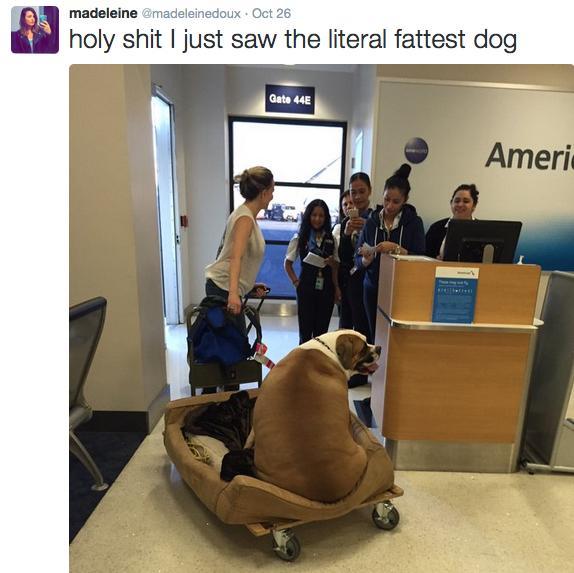 Twitter AA Fat Dog