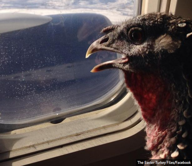 Gobble Window Seat