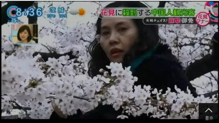 Chinese Tourists Cherry Season Japan 1