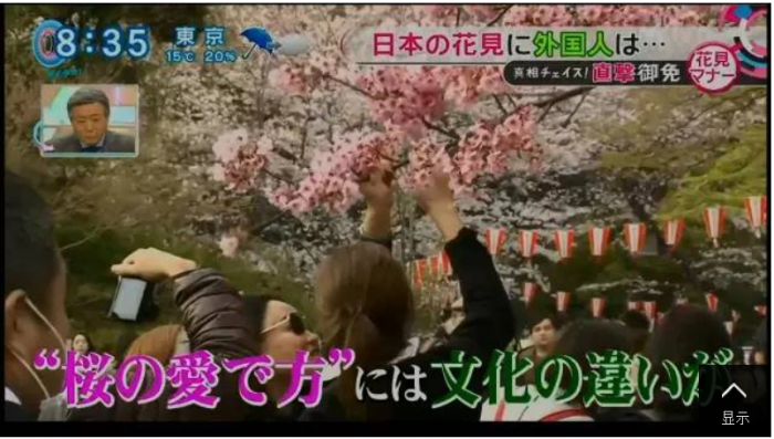 Chinese Tourists Cherry Season Japan 3